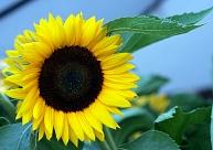 Sestdien pēc aukstuma rekordiem saule gaisu sasildīs līdz +21 grādam