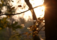 Brīvdienās būs lielākoties saulains laiks