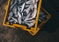 """Sāks zivju pārstrādes uzņēmuma """"Zivju pārstrādes uzņēmumu serviss"""" likvidācijas process"""