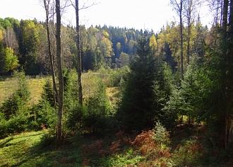 """""""Latvijas Valsts meži"""" aicina būt īpaši uzmanīgiem ar uguni mežā"""