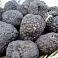 Latvijā atrasta pirmā savvaļā augusi ēdamā trifele