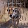 Aicina ziedot Valmieras dzīvnieku patversmes iemītniekiem