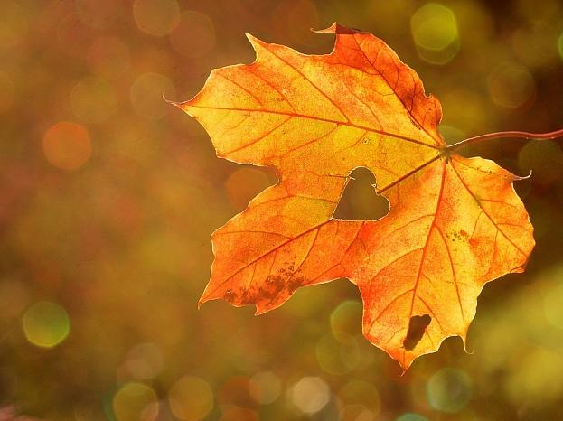 Ilustratīvs foto/ Foto: Pixabay