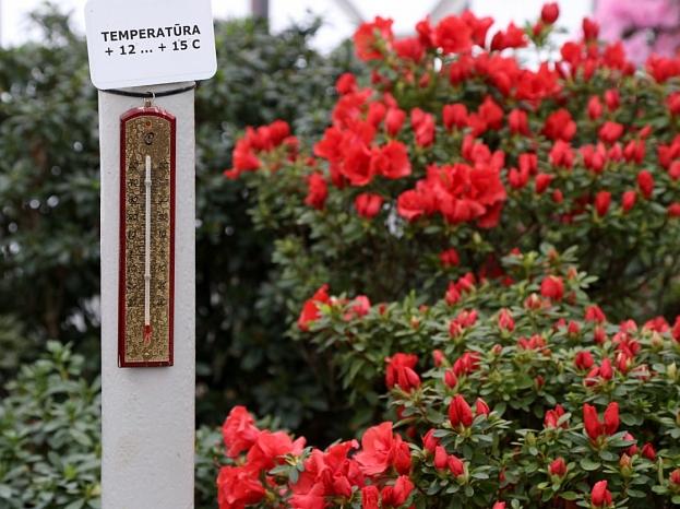 Termometrs acāliju mājā Latvijas Universitātes Botāniskajā dārzā.