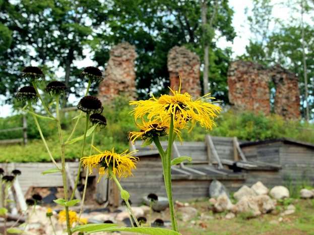 Livonijas ordeņa pils drupu fragments un arheoloģiskās izpētes darbi Alūksnes Pilssalā.