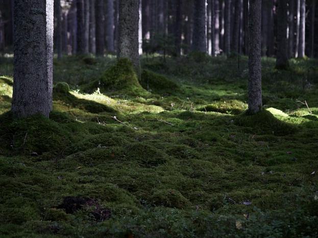 """""""Venden"""" dabiskā avota ūdens ieguves vietas - """"Mežuļu"""" avota apkārtne  Gaujas nacionālajā parkā."""