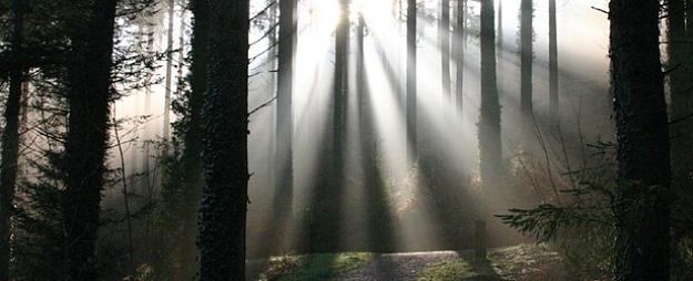 """Pirmdien Īles mežā plānota Saeimas deputātu un """"Latvijas Valsts mežu"""" vadības tikšanās ar vides aktīvistiem"""