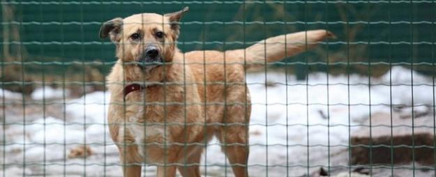 Cēsīs klaiņojošo dzīvnieku īpašniekiem stingrāki sodi