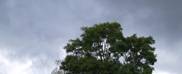 Kurzemes reģionā gaidāms lietus, gaiss iesils līdz plus 23 grādiem