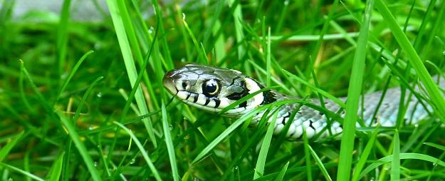 Zemgalē slimnīcā nogādāti vairāki čūsku sakosti cilvēki