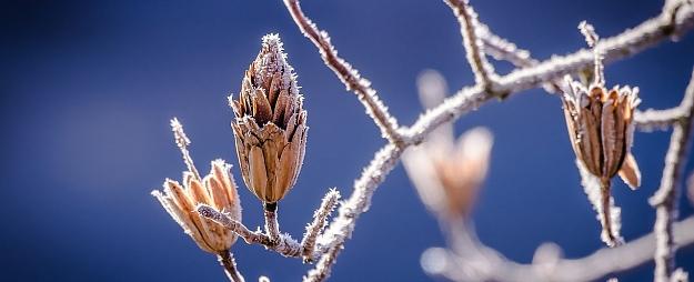Latgalē šoruden pirmo reizi gaisa temperatūra noslīdējusi zem 0 grādu atzīmes