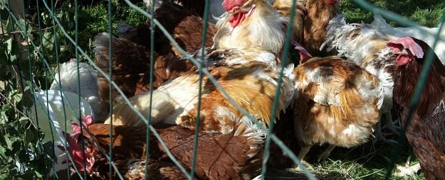 """""""Balticovo"""" uzaicinājusi """"Dzīvnieku brīvības"""" pārstāvjus inspicēt uzņēmumu"""