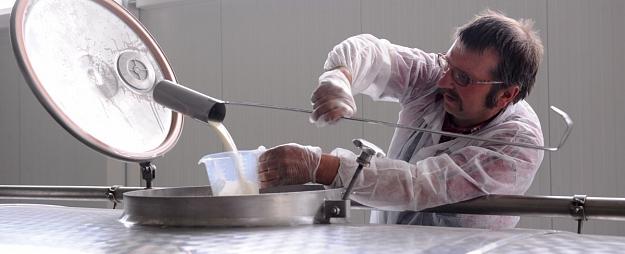 Pērn pieaudzis nodotā piena apjoms un vidējais izslaukums; govju skaits turpina sarukt