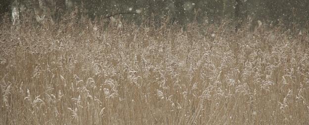 Sestdien daudzviet īslaicīgi snigs un puteņos