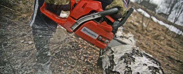 Liepājā saistībā ar Vecās ostmalas labiekārtošanu plāno nozāģēt vairāk nekā 50 kokus