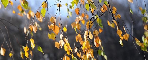 Sestdien visā Latvijā gaidāms saulains laiks