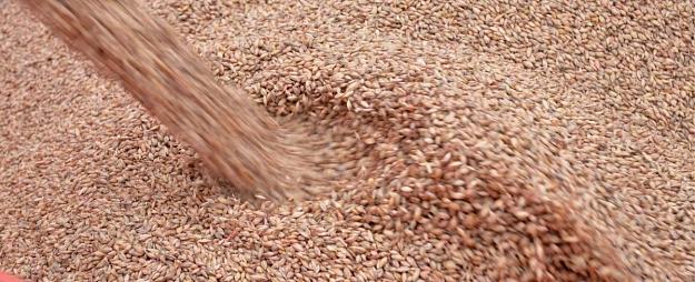 LAD: Līdz gada beigām platību maksājumus plānots izmaksāt 90% lauksaimnieku