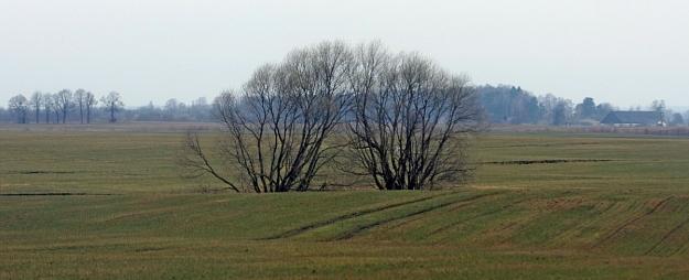 Lauksaimnieki: Vietām ziemāju sējumiem trūkst mitruma un ir bažas par to pārziemošanu