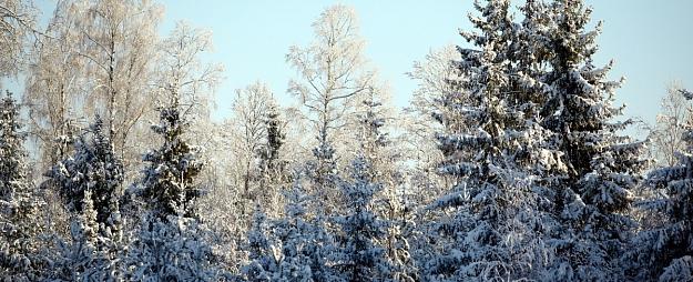 Eksperte: Latvijā mežu ir salīdzinoši daudz, taču tikai maza daļa klasificējami kā bioloģiski augstvērtīgi