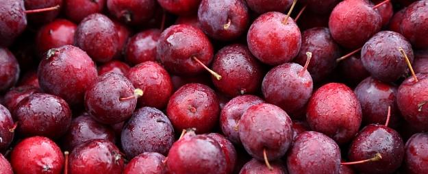 Vīna darītava Kandavas novadā ieguldīs 63 750 eiro jaunas ražotnes izveidē