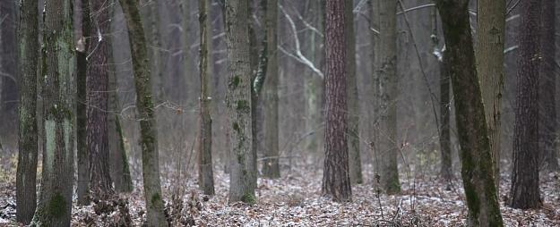 Mežu īpašnieki rosina meklēt risinājumu saimniekošanas iespējām aizsargājamās dabas teritorijās