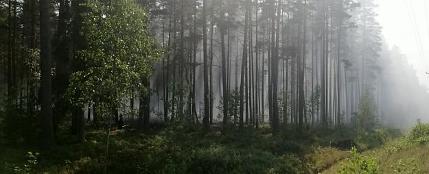 Kandavā turpinās bīstama meža ugunsgrēka ierobežošana