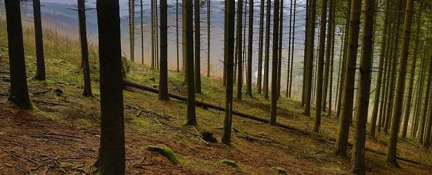 """""""PrivatBank"""" izsniegusi finanšu līzingu 280 000 eiro apmērā kompānijai """"Baltijas koku eksports"""""""