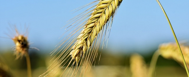 """Baltic Agro"" apgrozījums pērn saruka par 16,9%"