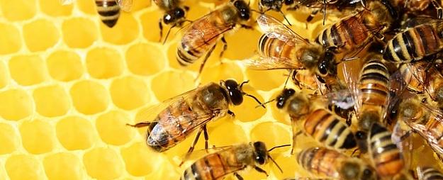 """Latvijas uzņēmums """"Austra pak"""" saņēmis starptautisku apbalvojumu par kartona iepakojumu bišu transportēšanai"""