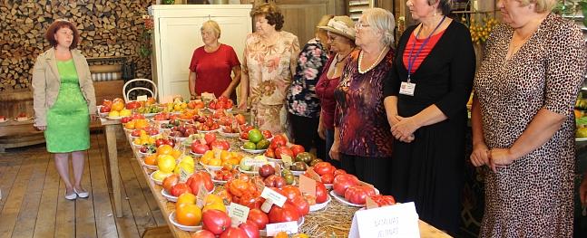 Valmierā apskatāma izstāde ar vairāk nekā 100 tomātu šķirnēm