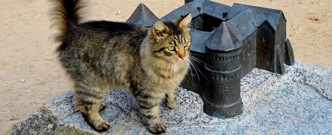 Cēsniekiem būs iespēja pārbaudīt mājas kaķu veselību