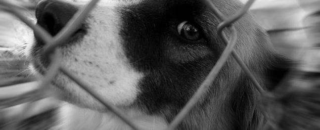 Zemgalē slimnīcā nonākusi kaimiņu suņa sakosta sieviete