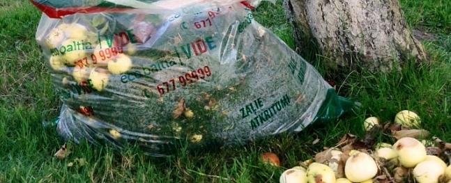 Siguldiešiem iespējams atbrīvoties no bojātiem āboliem