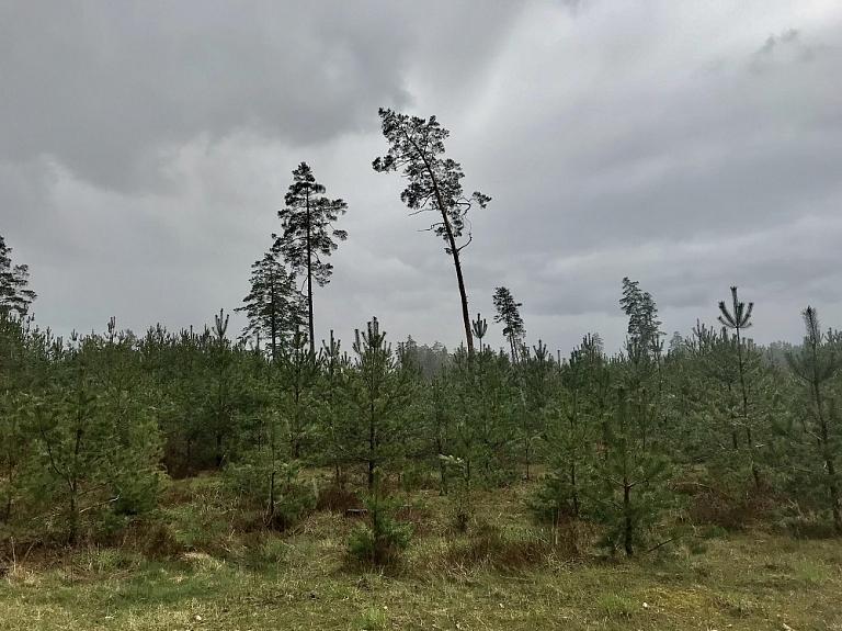 Profesionāla un atbildīga meža apsaimniekošana – HD Forest