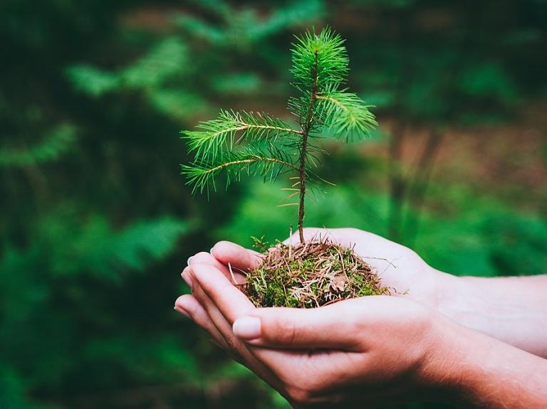 HD Forest – tavs sadarbības partneris ilgtspējīgā meža apsaimniekošanā