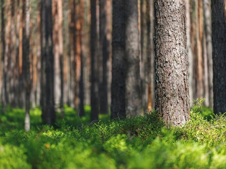 SIA Niedrāji MR – tavs uzticamais sadarbības partneris mežizstrādē