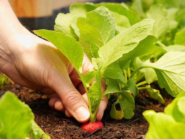 Kā atpazīt bioloģiski audzētu pārtiku?