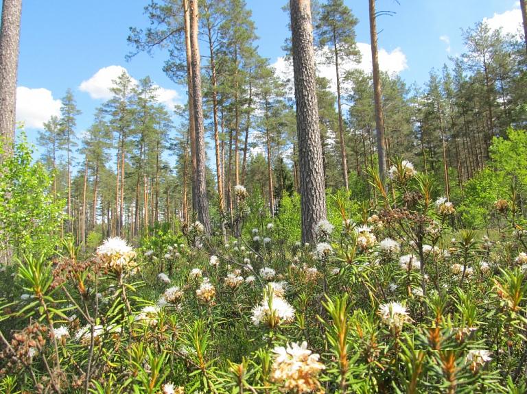 Kooperācijas iespējas mežsaimniecībā–seminārs 1. oktobrī Valmierā