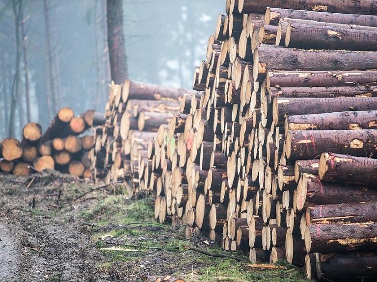 """Mežizstrāde, nekustamo īpašumu apsaimniekošana un celtniecība. SIA """"Sandevija"""""""