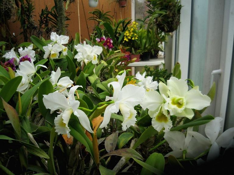 Egona Tones orhideju kolekcija un eksotiskie dzīvnieki