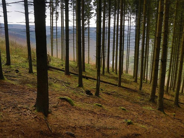 """DAP: PTAC atzīst, ka """"Stiga RM"""" maldinājis sabiedrību par dabas skaitīšanas ietekmi uz mežsaimniecību"""