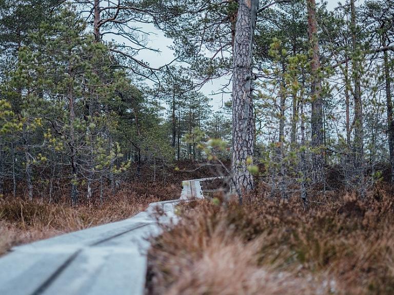 Niedrāju-Pilkas purva taka – gan putnu vērošanai, gan pastaigai