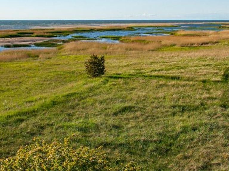 Randu pļavas un putnu vērošanas tornis