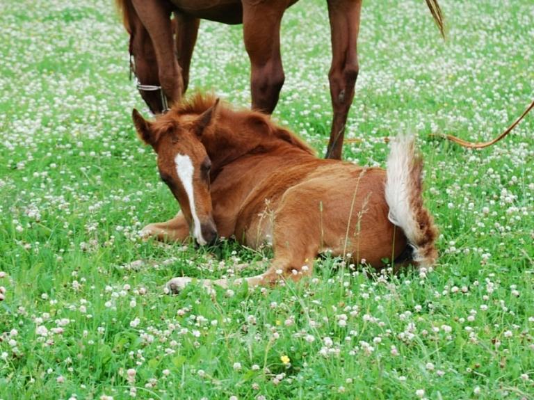 """Izjādes ar zirgiem un zirgu pajūgiemz/s """"Mežaines"""""""