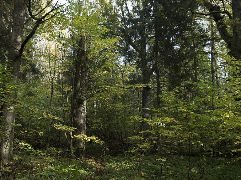 Kad vītero putni un zied mežābeles – ko redzēt Ukru gāršā?