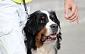Rēzeknē notiks Latvijas dažādu šķirņu suņu izstāde