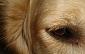 Latgalē slimnīcā nonācis zēns, kuram suns sakodis seju