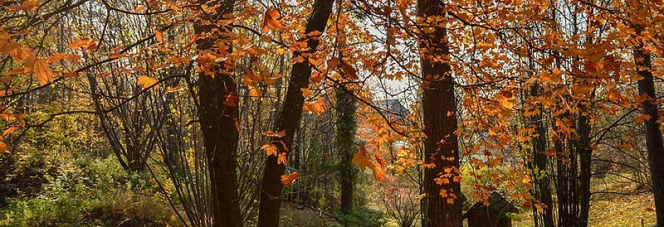 Kurp doties vērot lapkriti: 5 pastaigu takas krāšņam rudenim
