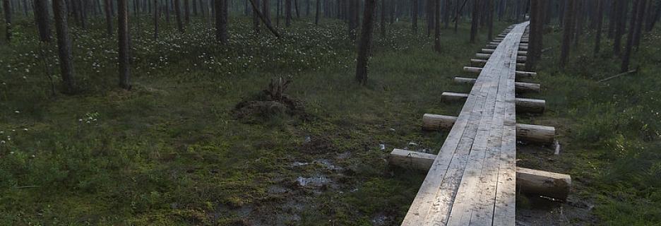 Stompaku purvu dabas taka – ceļš uz kādreizējo Nacionālo partizānu apmetni