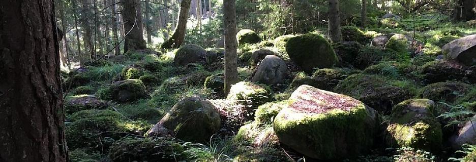 Unikālās un nostāstiem apvītās Kaltenes akmens kalvas Kurzemes jūrmalā